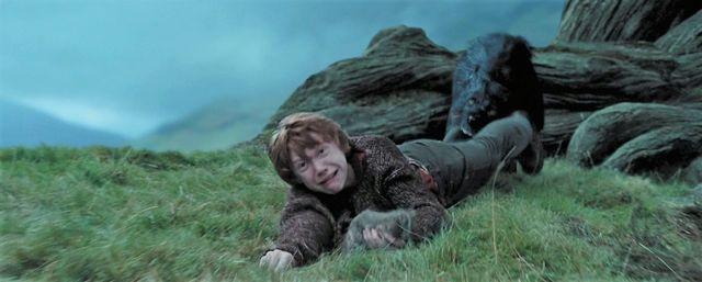 Potterish :: Harry Potter, o Ickabog, Animais Fantásticos e JK Rowling Os sete momentos mais corajosos de Rony Weasley